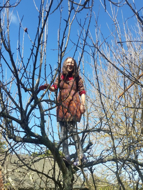 raewyn pruning the Appletree apple tree 26 8 15